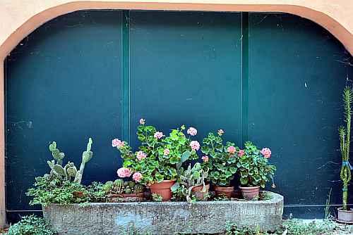 fiori agriturismo Umbria